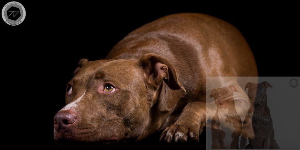 Traumhund01